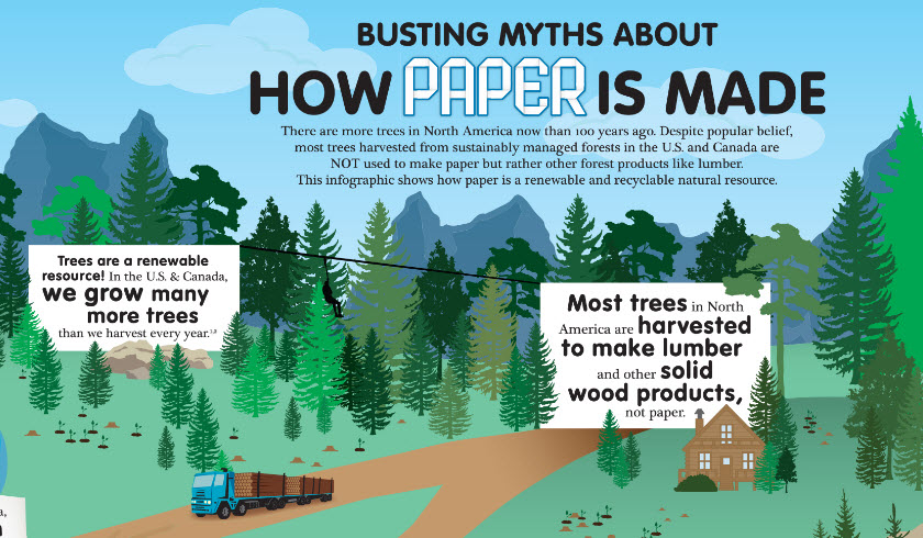 How Paper is made: The Infographic | Woodland Paper