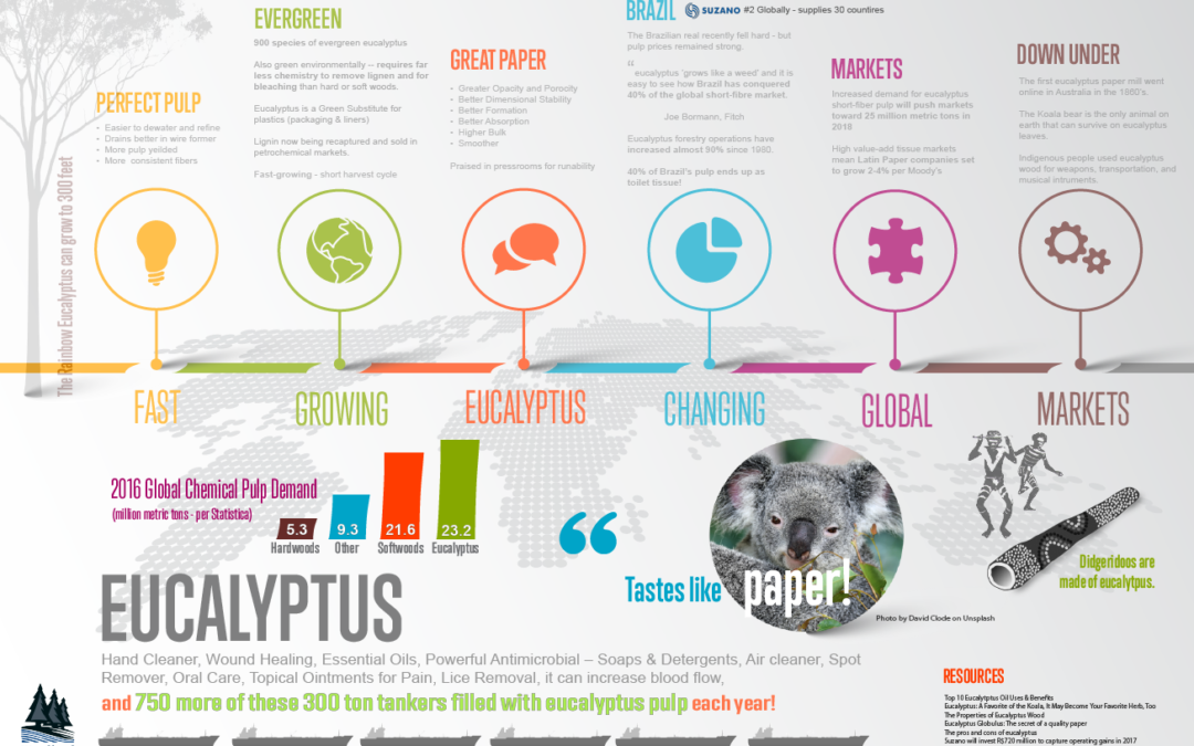 Eucalyptus: The Market Leader (An Infographic)