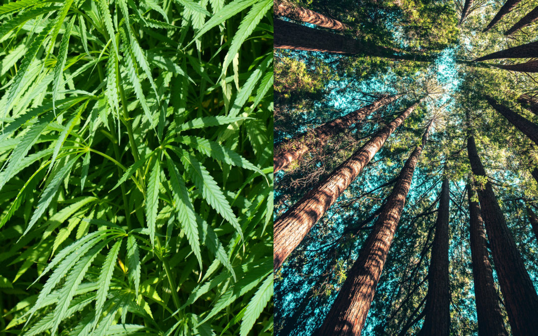 The Shocking Link Between Paper and Hemp